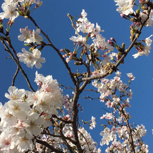 春のスクーリング☆